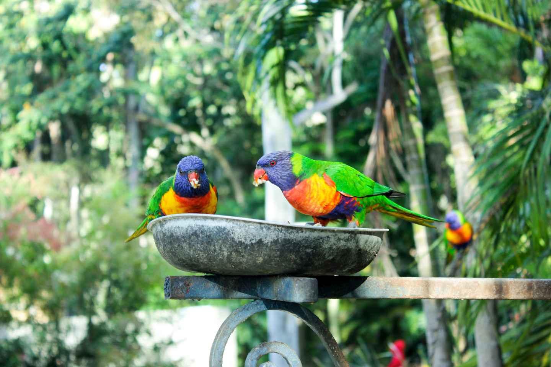 Vogelpark von Bali Eintrittskarte 1 Tag