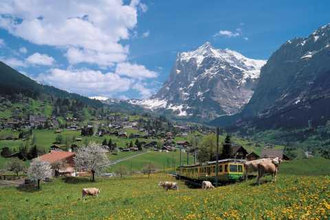Desde Lucerna: excursión de 1 día a Grindelwald e Interlaken