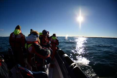 Express Whale and Puffin Watching Tour from Reykjavik