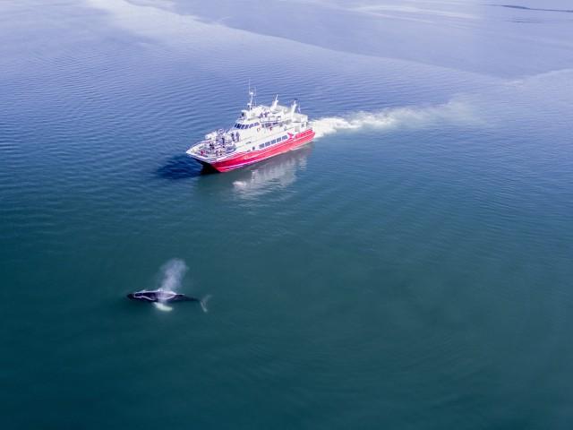 Akureyri: 3-uur walvisspotten