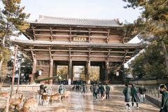 Nara Como um Local: Excursão Guiada Customizada