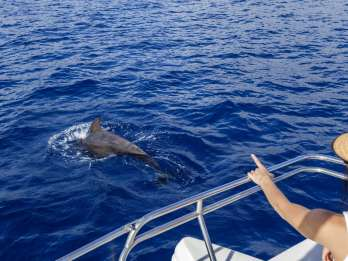 Teneriffa: Delfin- und Walbeobachtung per Segelboot