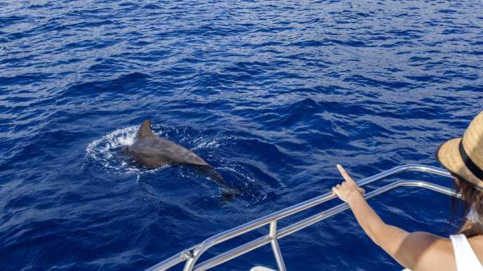 Tenerife: 3 h en barco y avistamiento de ballenas y delfines