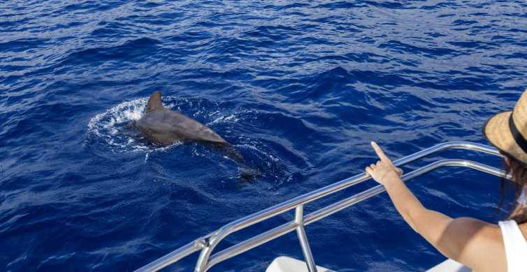 Tenerife: 3-Hour Whale and Dolphin Watching by Sailboat