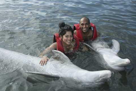 4-Hour Dolphin Adventure Tour from Varadero