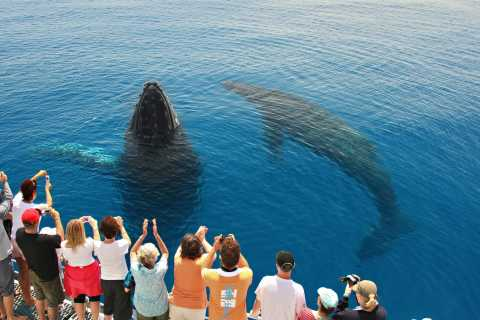 Hervey Bay 4-Hour Whale Watch Encounter