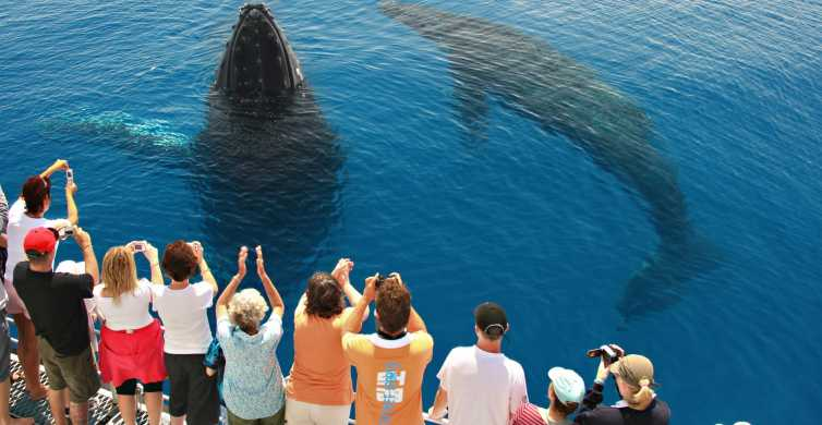 Hervey Bay: 4-stündige Walbeobachtungstour