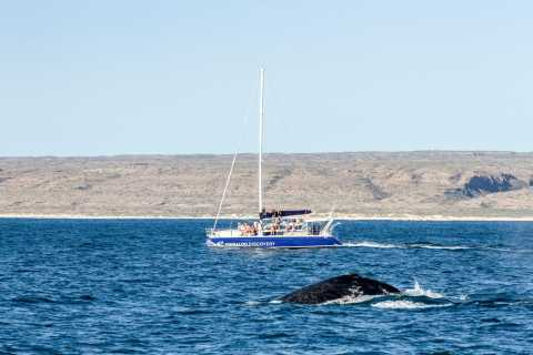 From Exmouth: Ningaloo Reef Swim with Humpback Whales