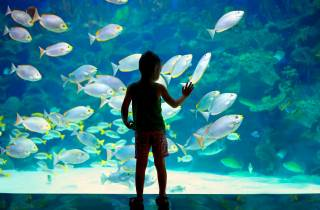 Ticket Ozeanographisches Museum Monaco