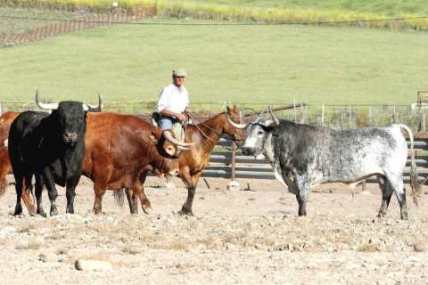 Desde Cádiz: toros privados de día completo y Arcos de la Frontera
