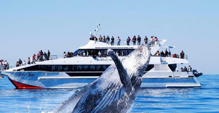 Brisbane: Whale Watching Cruise with Gourmet Lunch