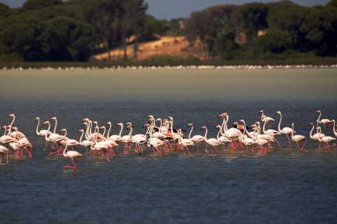 Desde Cádiz: Parque Nacional de Doñana y Sanlúcar