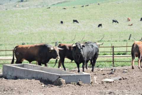 From Seville: Brave Bull's Ranch & Jerez Historical Tour