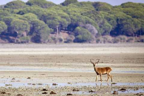 From Seville: Private Doñana National Park and Sanlucar Tour