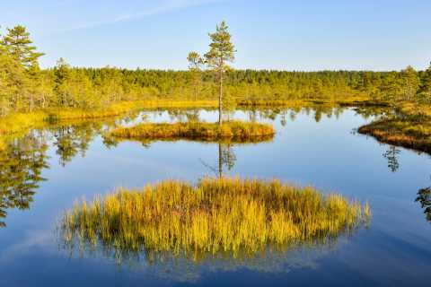 From Tallinn: Day Trip to Lahemaa National Park