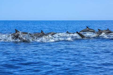Puerto de Mogán: Market Tour and 4.5-Hour Dolphin Watching