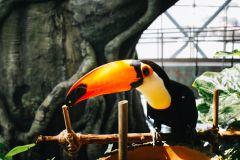 The Green Planet - A Floresta Tropical Coberta de Dubai