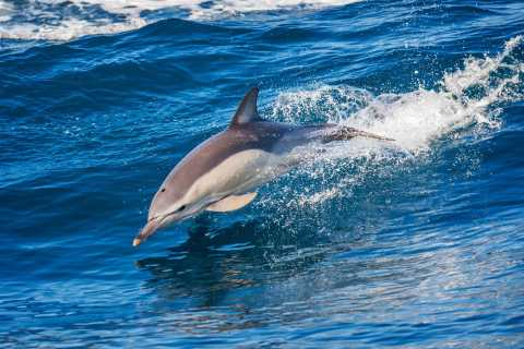 Algarvian Mountain Off Road and Cave and Dolphin Boat Tour