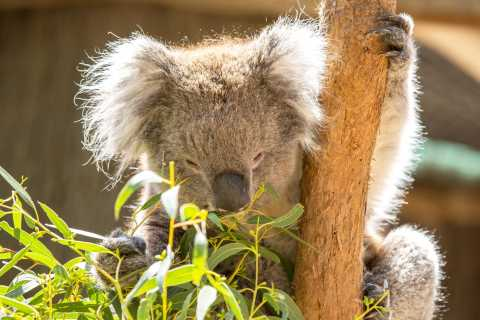 Cleland Wildlife Park Experience with Mount Lofty Summit