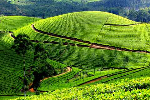 Munnar Private Day Trip
