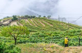 Ab Porto: Douro-Tal Tour mit Weinprobe & Mittagessen