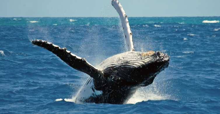 Terceira Island Whale Watching and Jeep Tour