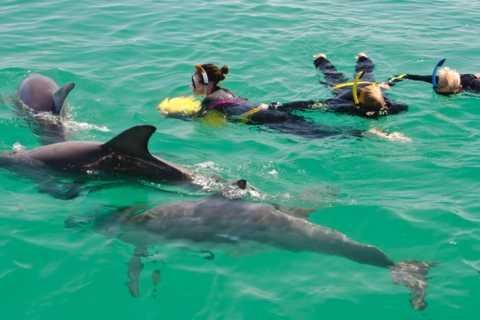 Wild Dolphin Swim e cruzeiro de um dia saindo de Perth