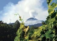 Von Catania: Ganztägige Ätna-Weintour
