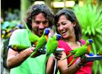 things to do alone in gold coast | feed the birds at currumbin wildlife sanctuary
