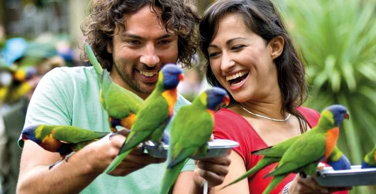 Currumbin Wildlife Sanctuary Ticket