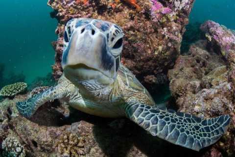 Muiron Islands Dive and Snorkeling Tour from Exmouth