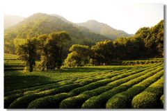 Private Hangzhou Tea Culture Day Tour