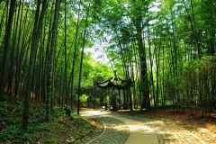 Passeio privado de serenidade e beleza da natureza em Hangzhou