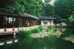 Hangzhou Private Half-Day Tea and Gardens Tour