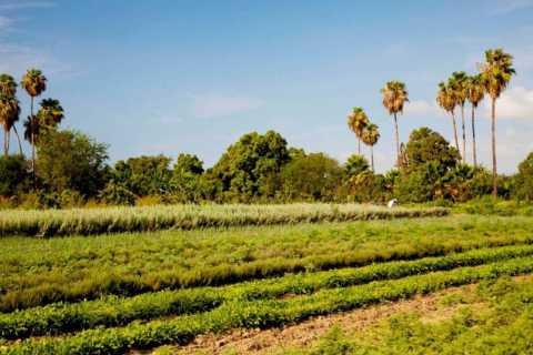 San Jose Organic Farm Tour and Cooking Class