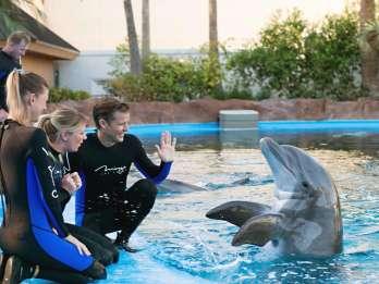 Delfinshow in Hurghada: Ticket und Transfer