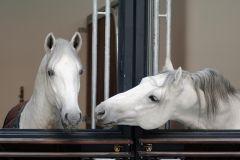 Viena: Tour Guiado na Escola Espanhola de Equitação
