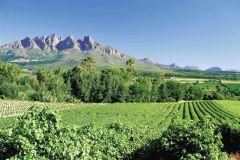 Da Cidade do Cabo: Excursão de 1 Dia Vinícolas e Degustação