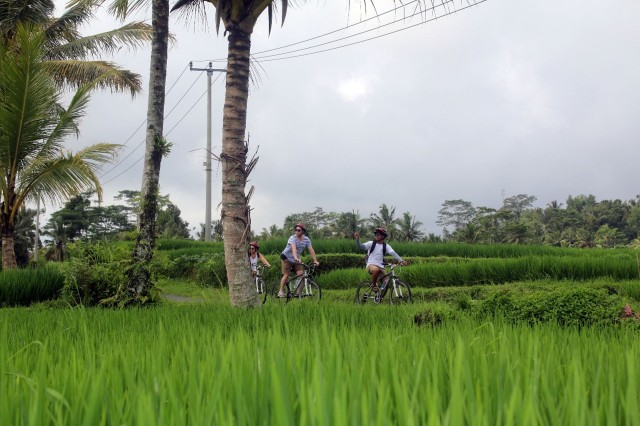 From Ubud: Downhill Bike Tour with Rice Terraces and Meal