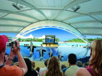 Ab Maspalomas: Tagestour Teneriffa und Zoo Loro Parque