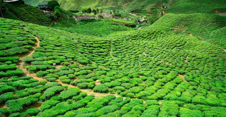 From Kuala Lumpur: Cameron Highlands Private Day Tour