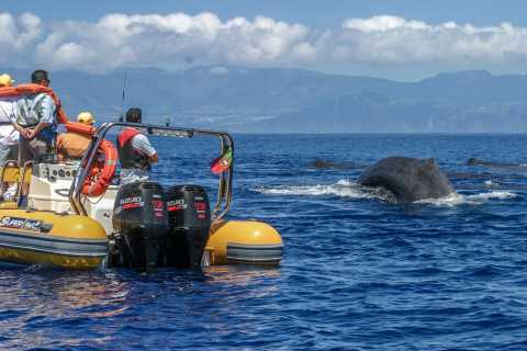 Azores Whale Watching Expedition and Islet Boat Tour