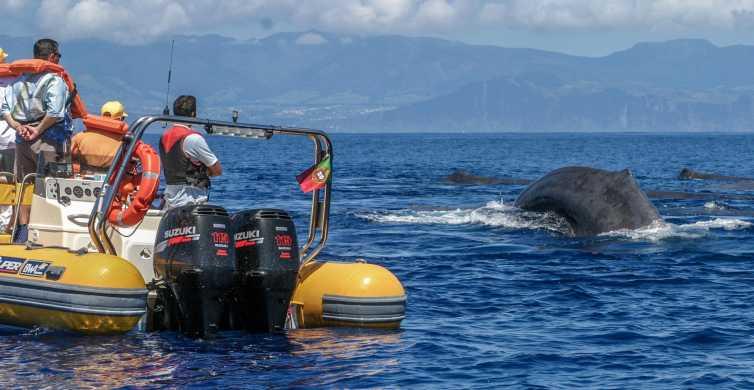Azoren: walvissen spotten en een Islet Boat-rondvaart