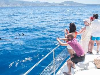 Teneriffa: Whale Watching-Tour