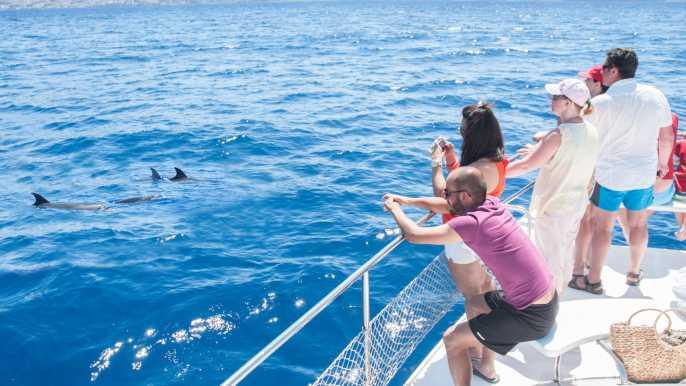 Tenerife: Whale Watching Catamaran Tour