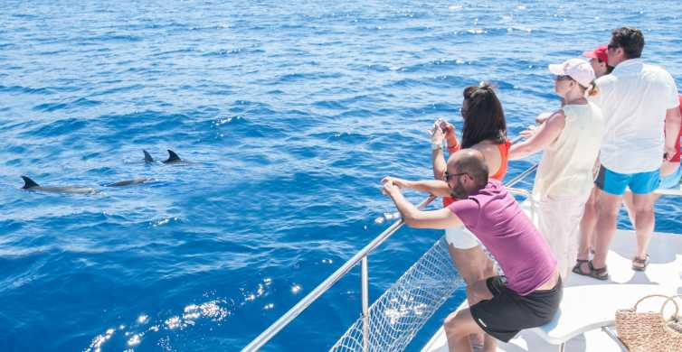 Tenerife: Whale Watching Tour