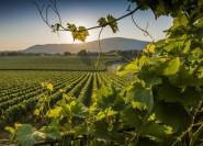 Ab Mailand: Franciacorta Shopping-Tour mit Weinprobe