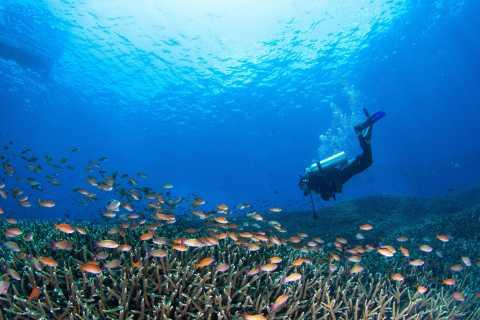 Gili Trawangan, Gili Air & Gili Meno: Fun Dive Trip
