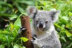 Brisbane: Excursão de dia inteiro no zoológico da Austrália