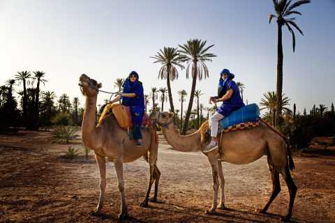 Marrakech: Half-Day Camel Ride in Palm Grove